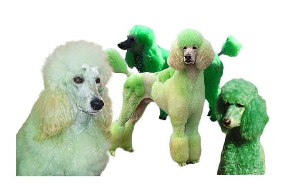 green-dogs.jpg