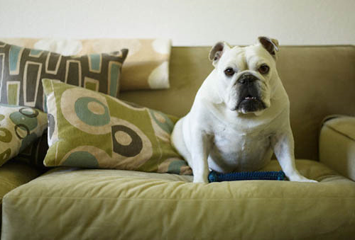 dogfuroncouch.png